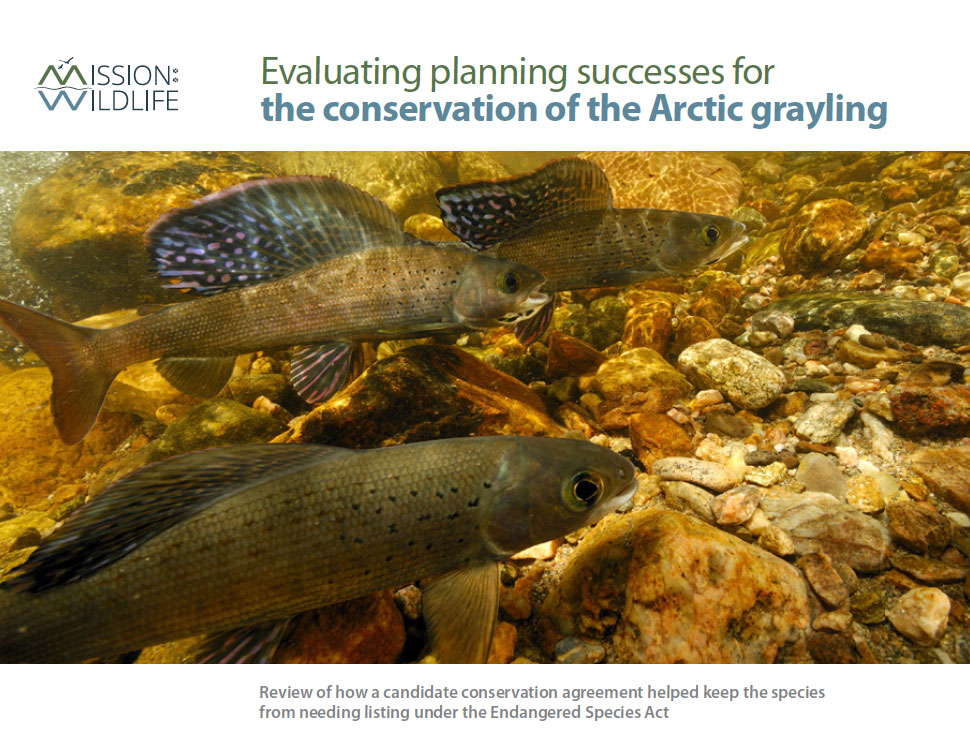 Arctic Grayling Report Cover