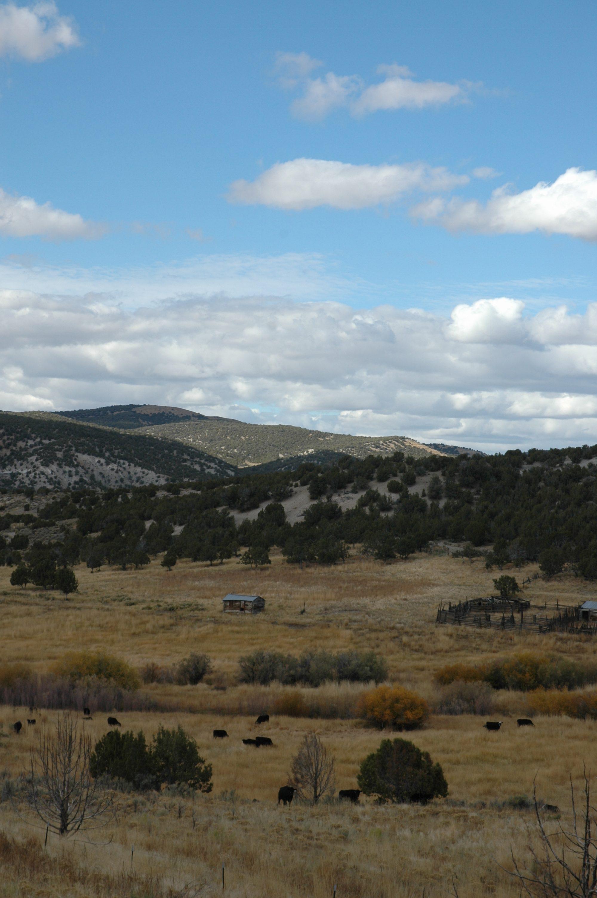 Della Ranch 10 15 09 254