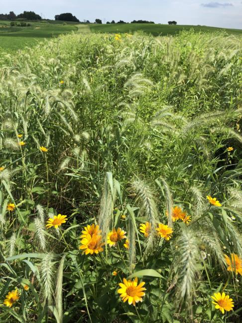 Conservation Brief - Prairie Strips